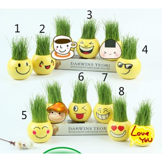 [Mini Plant] CUTE EMOJI MINI HAIR PLANT 5CM X 5CM HOME OFFICE ROOM HOUSE DECOR