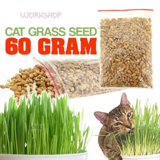 WORKSHOP 60g Cat Grass Healthy Organic Harvested Seeds