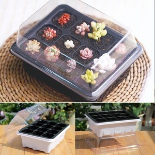 Seedling Tray Sprout Plate 12 Holes Nursery Pots Tray Lids Box For Gardening Bonsai Mini GreenhouseSucculent Succulent