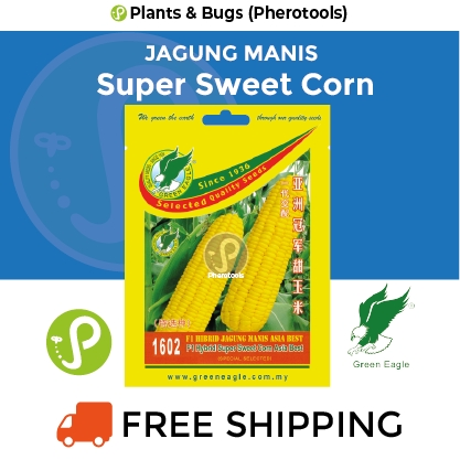 Green Eagle Sweet Corn Asia Best Super 1602 F1 Hybrid (Pherotools Seeds)
