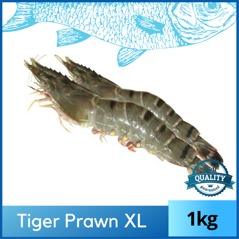 Tiger Prawn / Udang Harimau - (16/20) 1kg XL