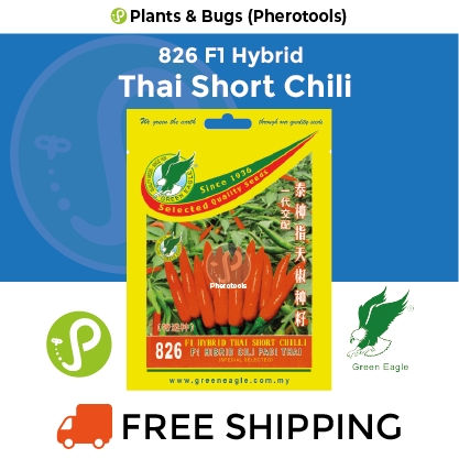 Green Eagle Chili Seeds 826 F1 Hybrid Thai Short (Pherotools Seeds)