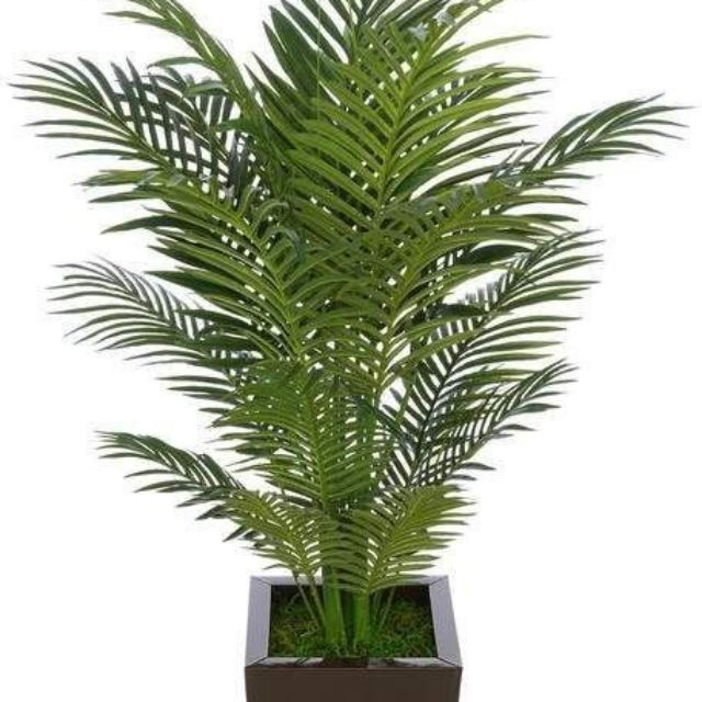 [ READY STOCK ] SCARTTED TAIL  / PALM TREE ARTIFICIAL PLANT . GRED PREMIUM A+ . DAUN TEBAL
