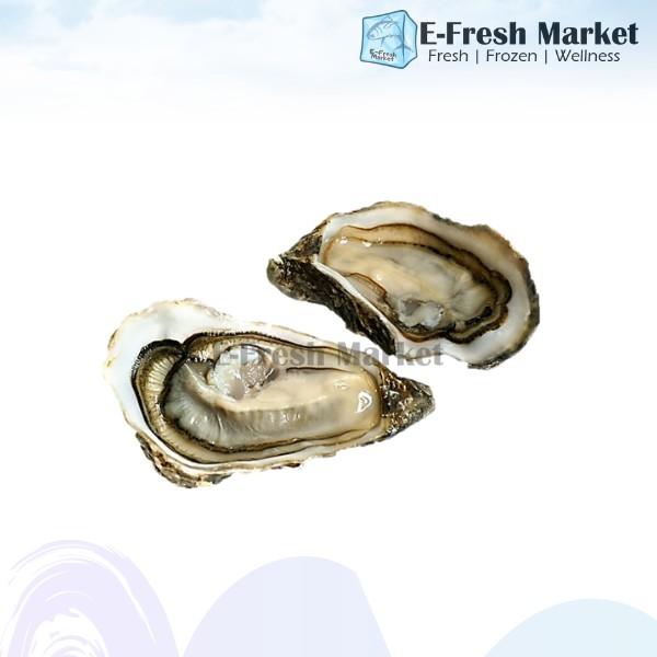Fresh Brackish Oyster From Balik Pulau Farm (Penang Only)