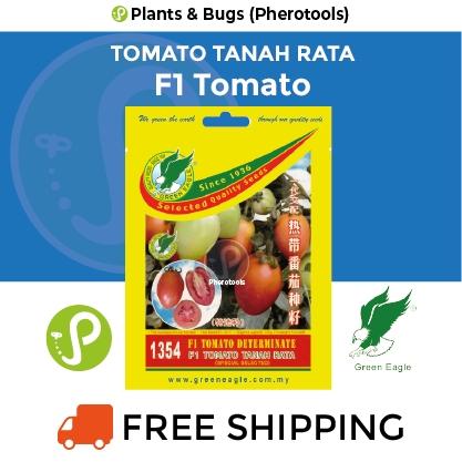 Green Eagle Tomato (Determinate) Seeds 1354 F1 (Pherotools Seeds)