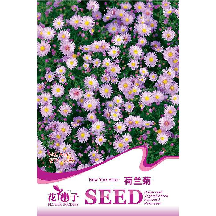 50pcs Aster Alpinum Seeds Original Packaging Flower Seed