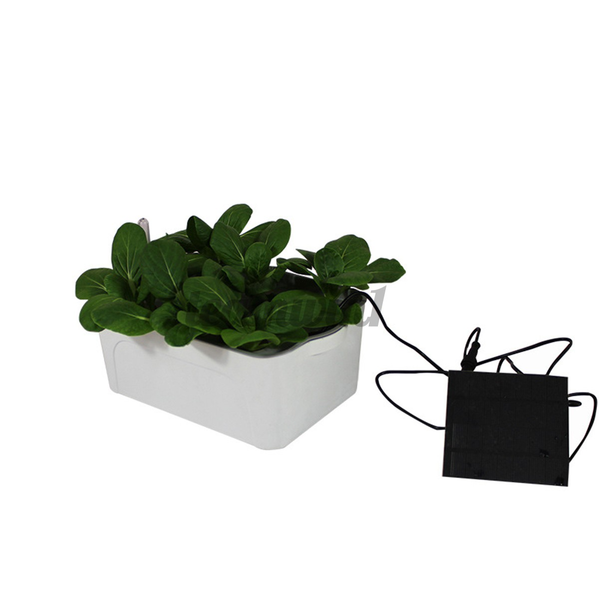 Hydroponic System Growing Kit Deep Water Culture Vegetable Plant Indoor Outdoor Shopee Malaysia