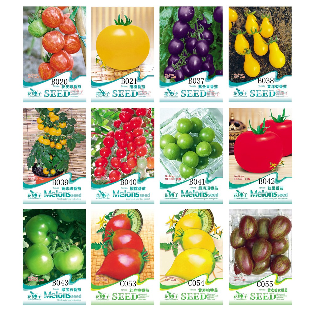 bonsai organic vegetable /& fruit seeds,potted plant for home /&garden 50 Seeds//pack rainbow tomato seeds rare tomato seeds