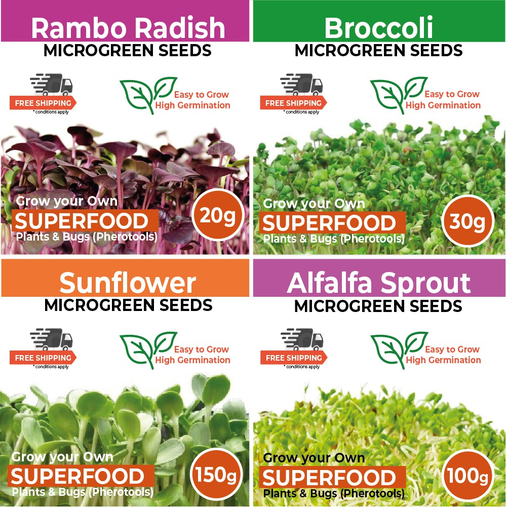 Microgreen Selection - Grow your own Superfood (High Germination Rates)