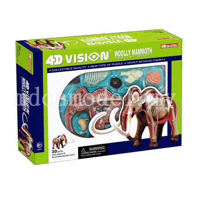 4D master Animal anatomical model 4D VISION PIG ANATOMY MODEL ...