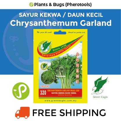 Green Eagle Chrysanthemum Garland Small Leaf Seeds 320 (Pherotools Seeds)