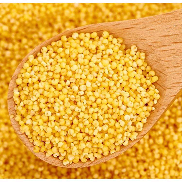 Millet 1kg 小米 Health Food Millet Rice