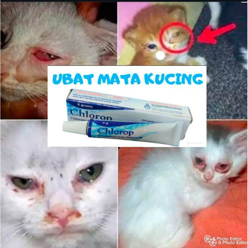 Kucing Sakit Mata Chorop Shopee Malaysia
