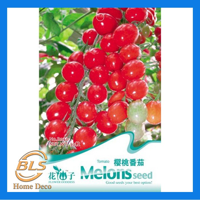 Tomato Seed 20 Seeds Flower Ball Tomato Lycopersicon Esculentum Vegetable B020