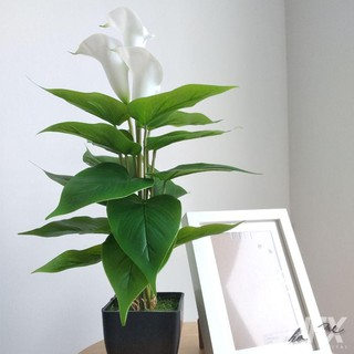 pokok bunga calla lily hiasan dekorasi rumah / simple fake