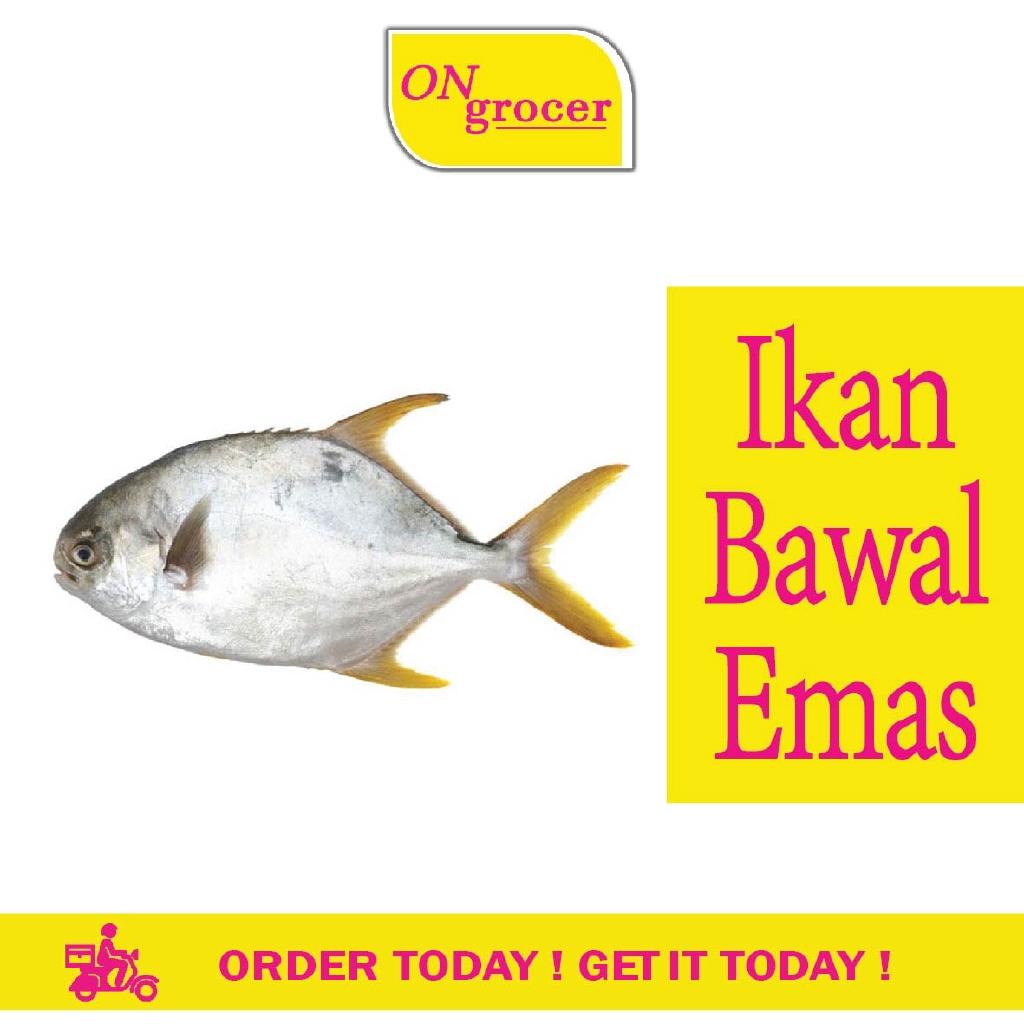 Ikan Bawal Emas 300 600g Pack Shopee Malaysia