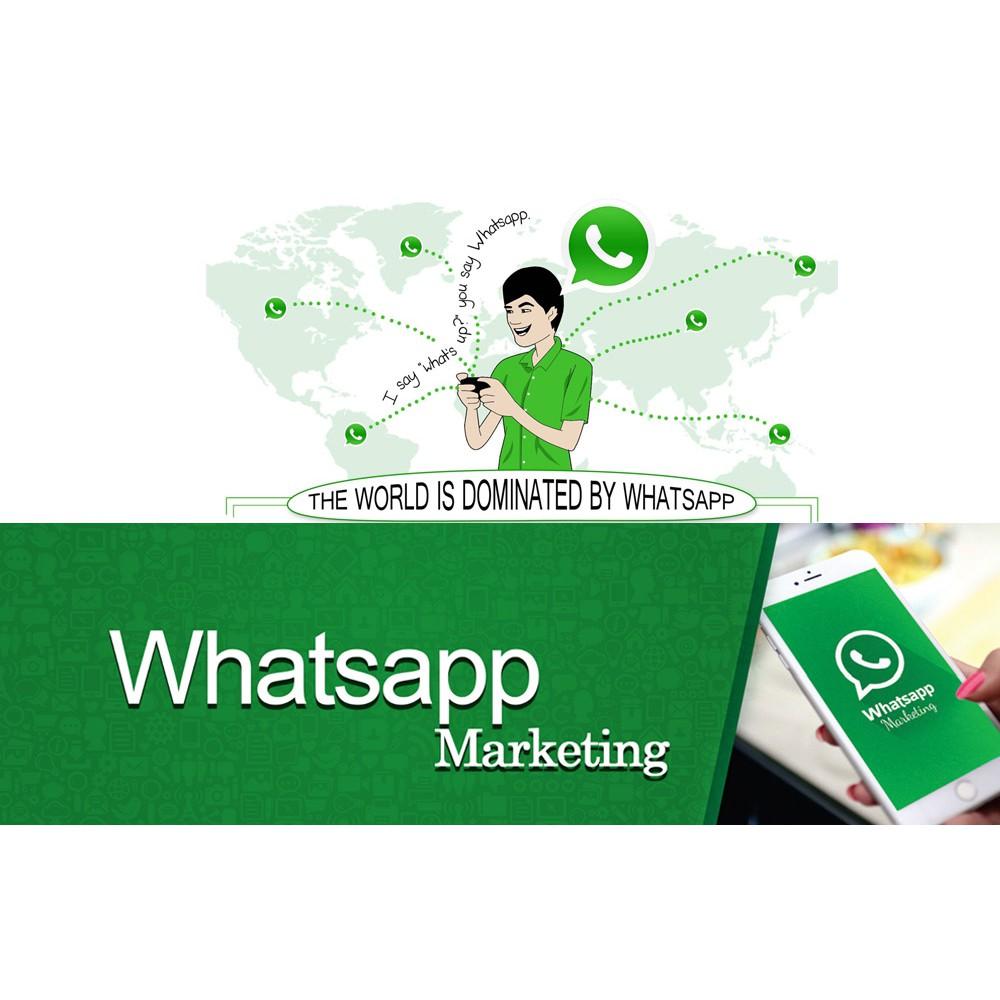 Whatsapp Blast Pro