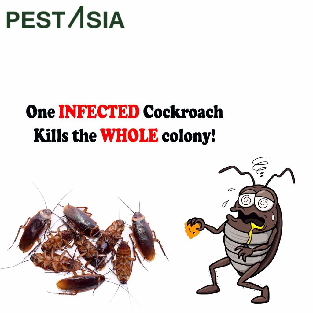 Pest Asia Cockroach Eco Bait *Penghapus Lipas