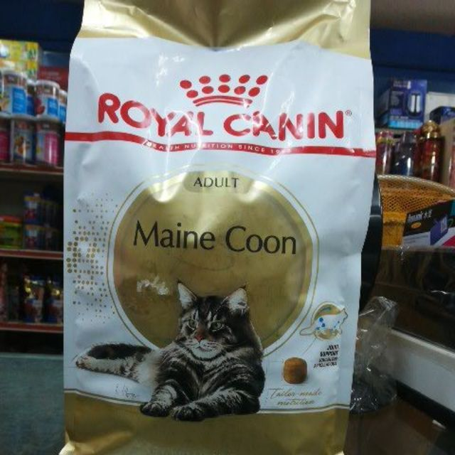 finest royal canin maine coon with royal canin maine coon