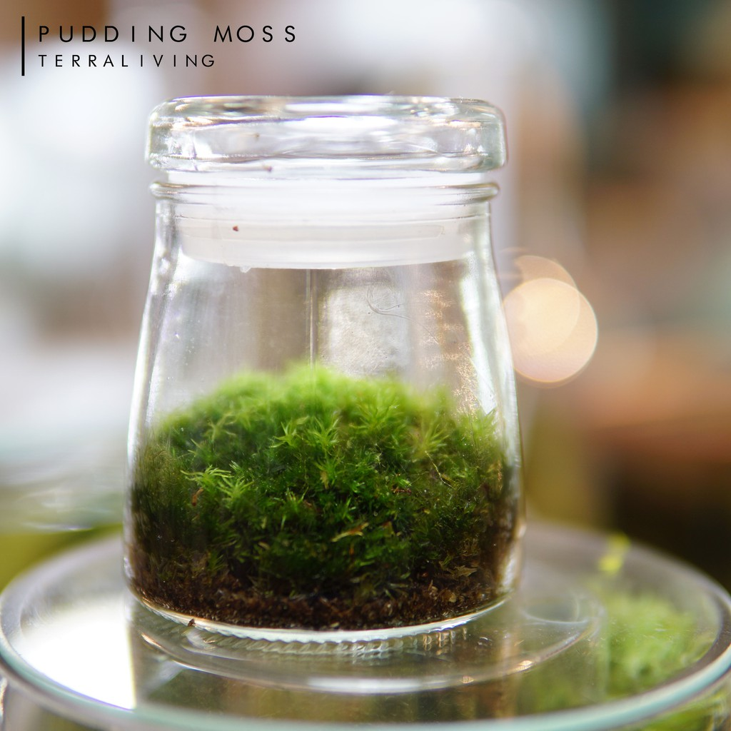 Live Moss Terrarium The Pudding Moss Official Licensed Product By Terraliving Shopee Malaysia