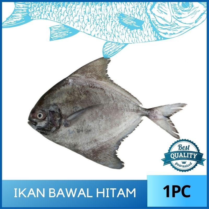Ikan Bawal Hitam / Black Pomfret - 250G+-