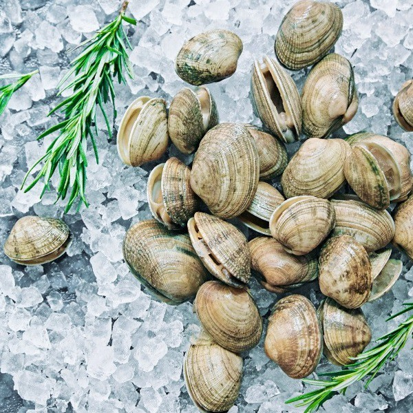 Short Neck Clam, 500g (Penang Only)