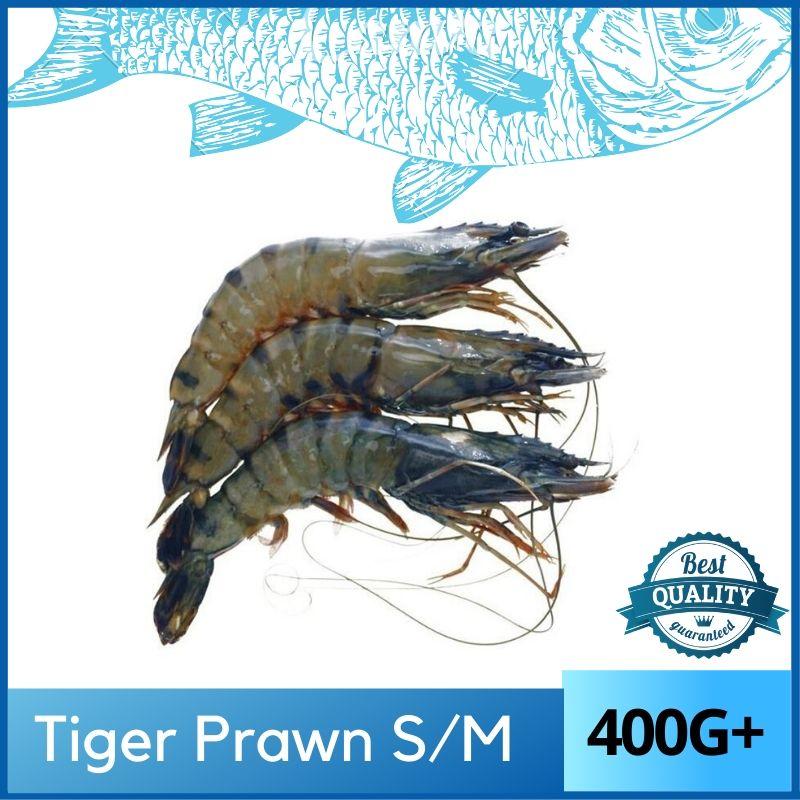 Tiger Prawn / Udang Harimau 400G (S/M/L)