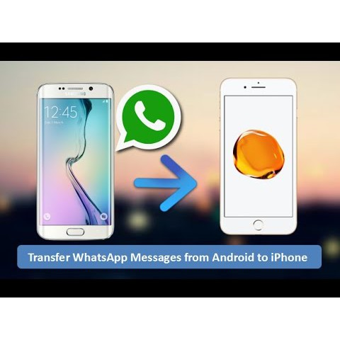 Backuptrans Android iPhone WhatsApp Transfer Plus (x32/x64