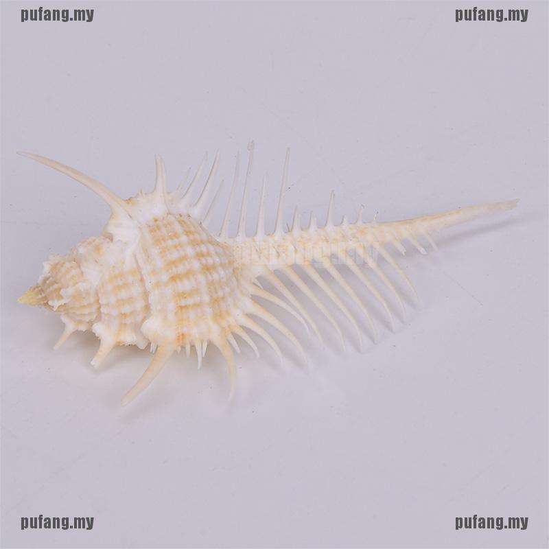 1pc Natural Murex Pecten Shell Conch Coral Sea Snail Home Fish Tank OrnamenH5