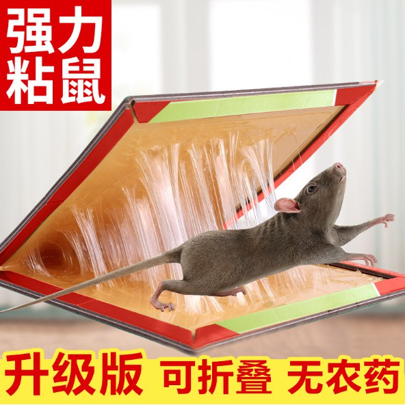 Rats Glue Traps Professional Strength Mouse Trap