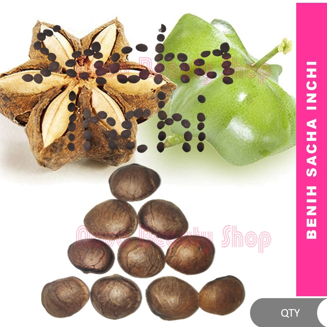 🍀 Biji Benih Sacha Inchi (5/10/50 biji) by I.Nor Plukenetia volubilis sacha peanut, Inca nut, kacang omega