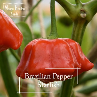 50Pcs Home Gardening Delicious Vegetables Plant Colorful Pepper Seeds WST