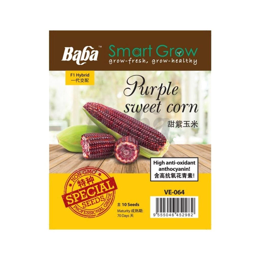 [IGL] VE-064 PURPLE SWEET CORN / BABA SMART GROW SEEDS / BIJI BENIH