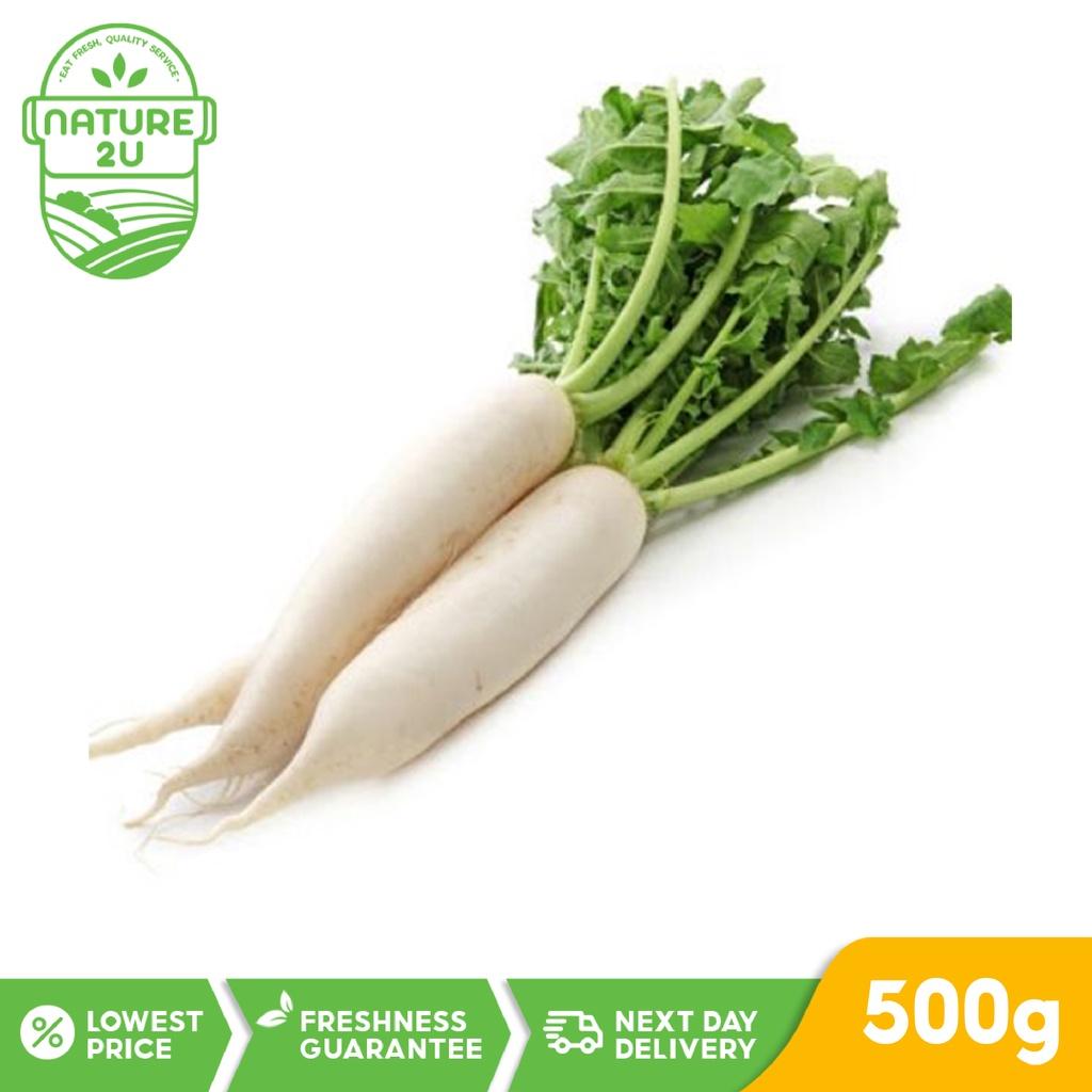 Fresh Vegetable - Raddish White (500G+-/PKT)