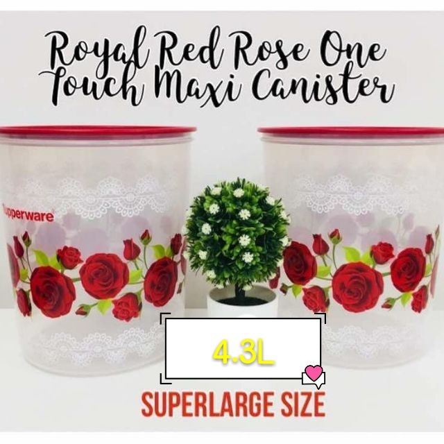 🔥BEST PRICE🔥 Royal Red Rose One Touch Maxi Canister