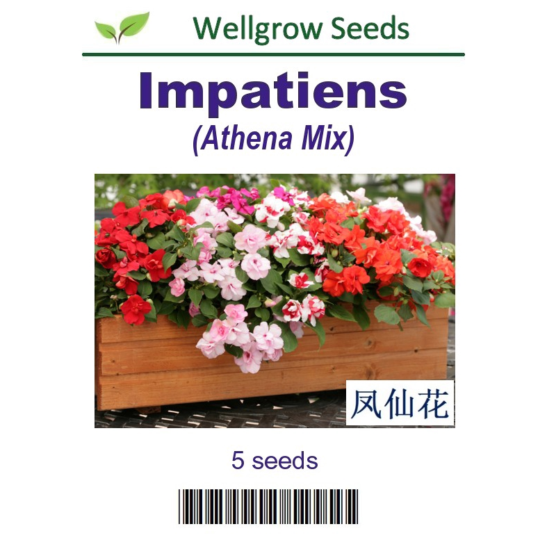 Perennial Flower Seeds Raspberry Ripple Carnation 30