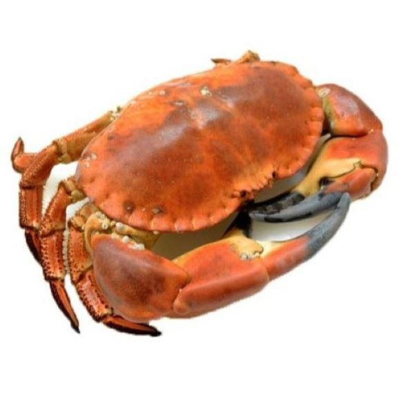 Irish Cooked Whole Brown Crab (Penang Only)