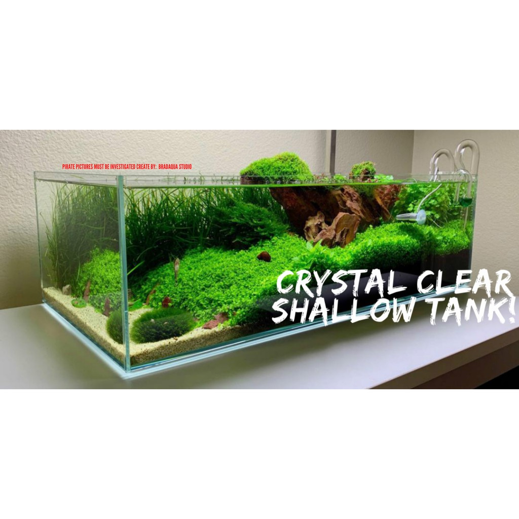 Aquarium Crystal Clear Shallow Tank 30cm 36cm 40cm 45cm 50cm 60cm Shopee Malaysia
