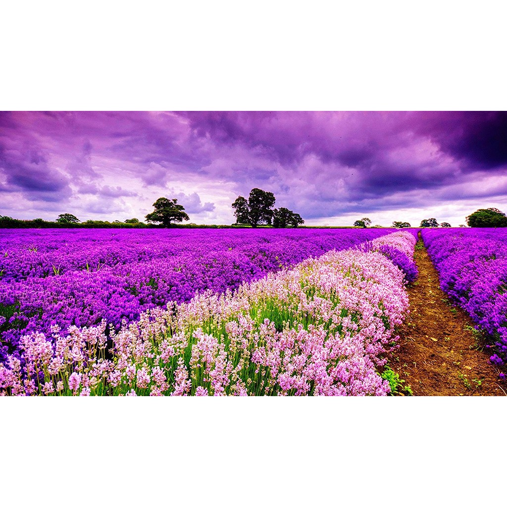 1000 Piece Wooden Jigsaw Puzzle Romantic Purple Field Of Lavender Flowers Sunset Puzzle Shopee Malaysia