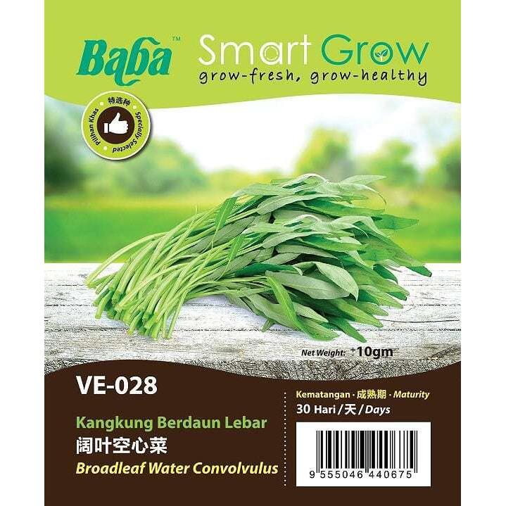 [IGL] BABA SMART GROW SEEDS / BIJI BENIH / VE-028 BROADLEAF WATER CONVOLVULUS @ KANGKUNG BERDAUN LEBAR