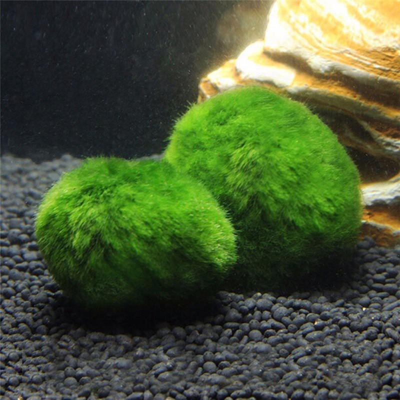 Aquarium Live Water Plant Grass Moss Ball Garden Fish Tank Shrimp Decor