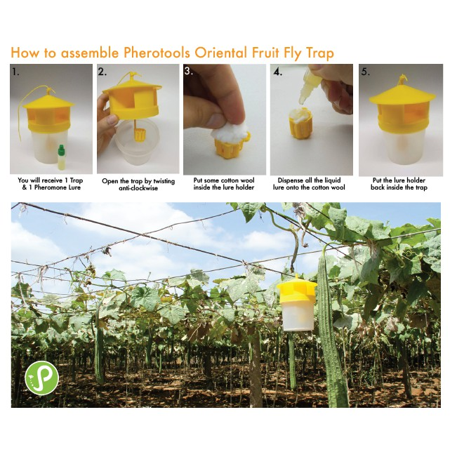 Oriental Fruit Fly Pheromone Attractant for Trapping (Methyl