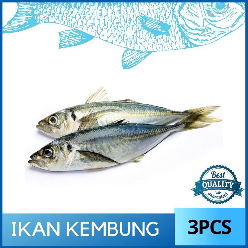Ikan Kembung (700-800g/3pcs)