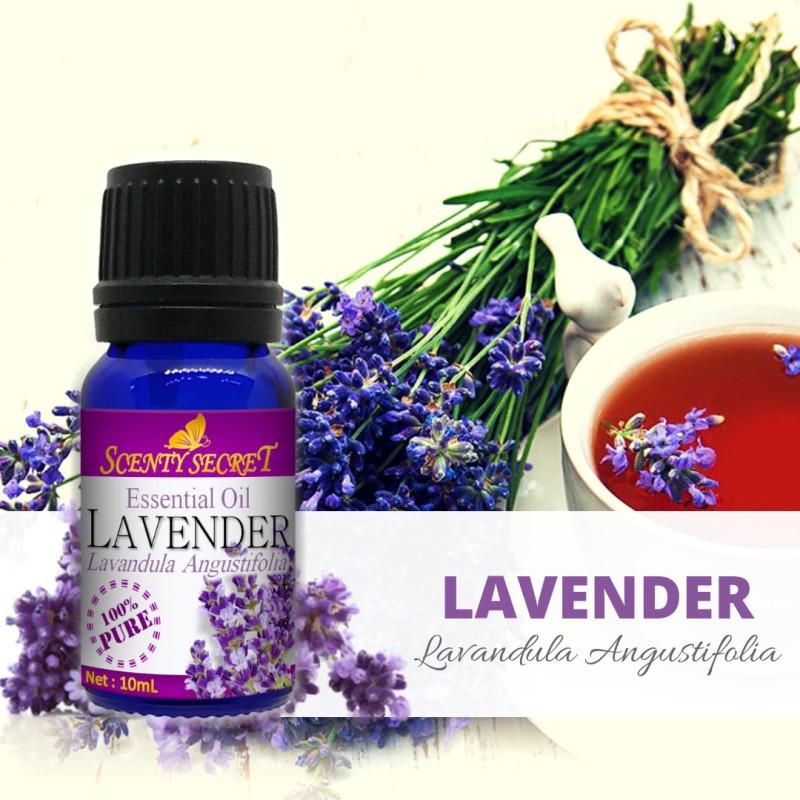LAVENDER Essential Oil - 100% PURE - Scenty Secret Aromatherapy