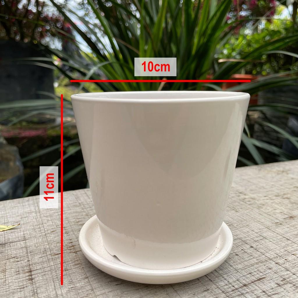 [IGL] Flower pot white glossy series 10cmx11cm ceramic pot [ready stock]