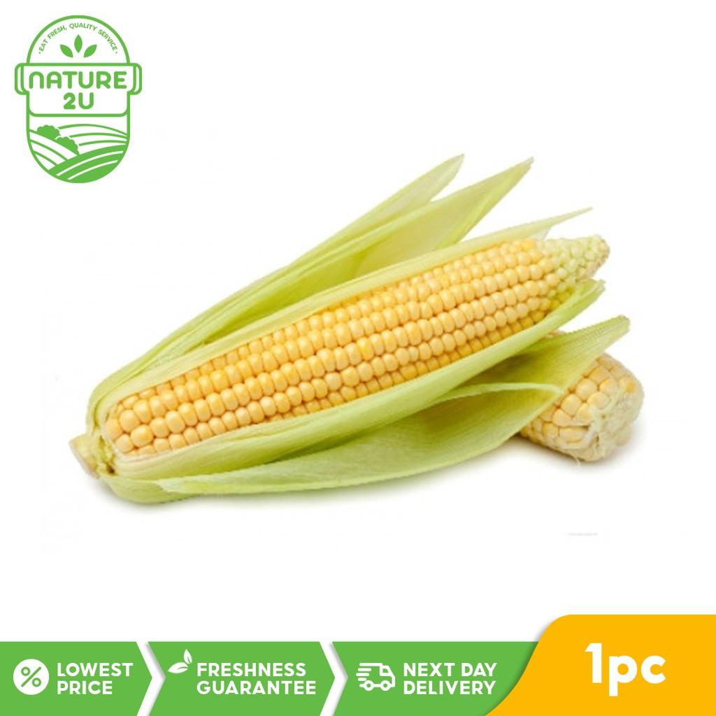 Fresh Vegetable - Sweet Corn (1PC/PKT)