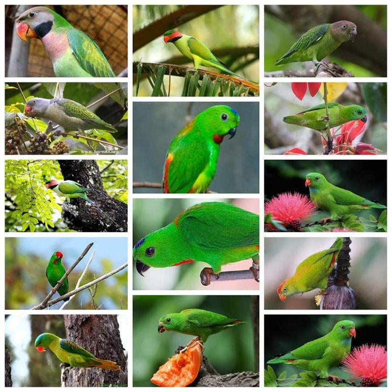 King Munchies Home Made Makanan Burung Serindit Parrotspeasis Shopee Malaysia