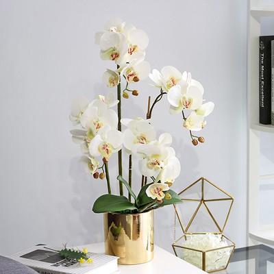 Lukisan Pokok Orkid Cikimm Com