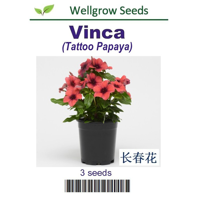 92829f1e3 Flower Seeds : Vinca Tattoo Black Cherry (3 seeds) | Shopee Malaysia