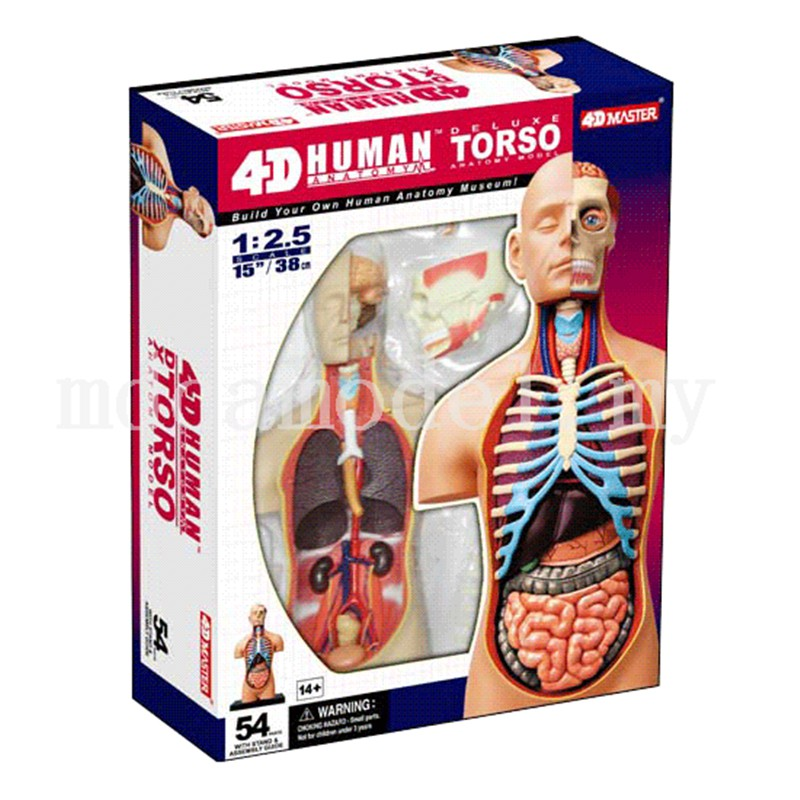 4d Master Human Anatomy Models Medical Model 125 Inches Deluxe